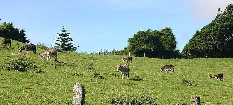 Group of donkeys in the field at Casons